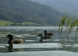 Weissensee - Sommer Video